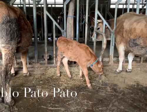 Pablo Pato – Agro Roller